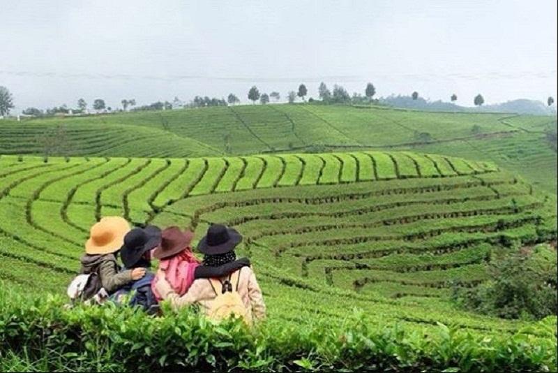 Gambar Kebun Teh Di Ciwidey Spot Foto Keren Yang Dapat Melepas Penat Di Perkebunan Teh Rancabali Ciwidey Guebanget Com