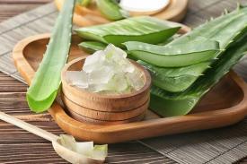 Atasi Masalah Kulitmu Dengan Tanaman Alami Aloe Vera