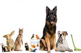 Manfaat Kesehatan Merawat Hewan di Rumah